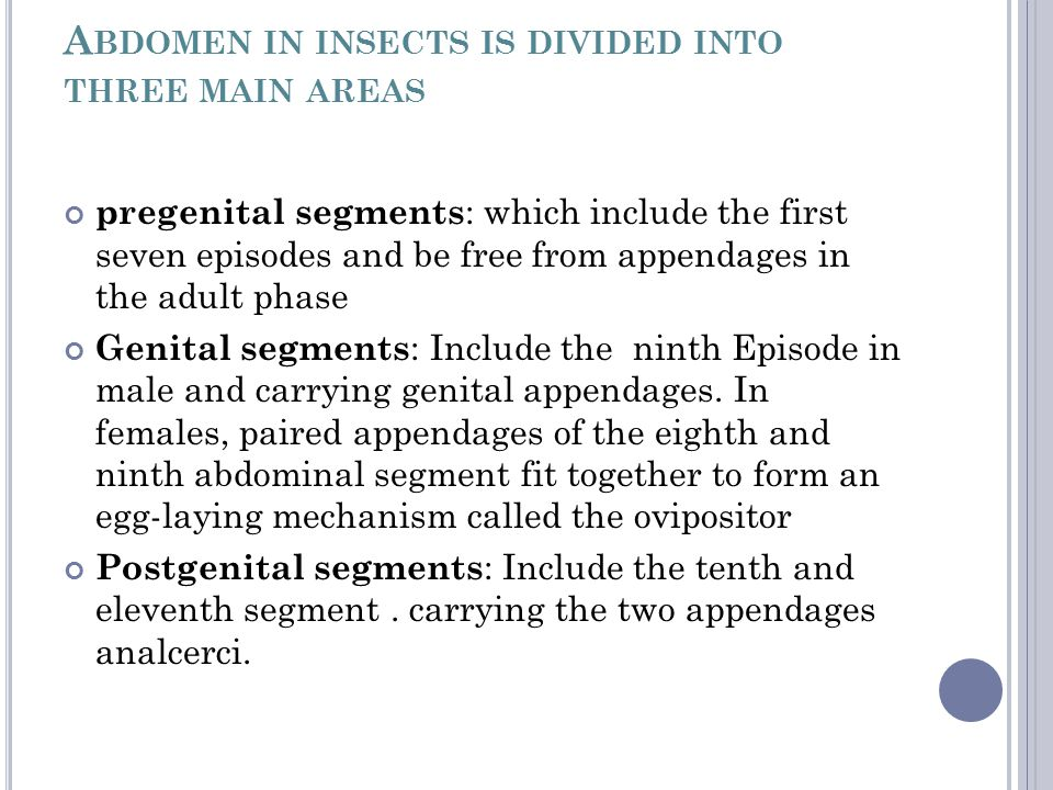 Abdomen in insects is divided into three main areas