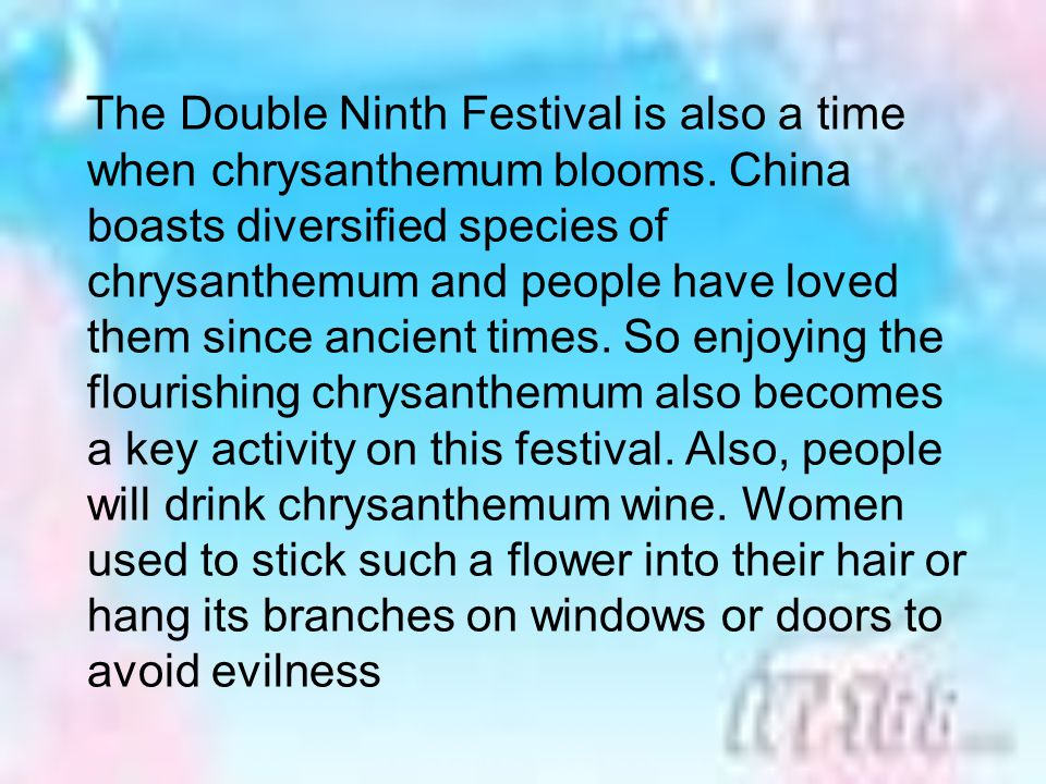 The Double Ninth Festival is also a time when chrysanthemum blooms
