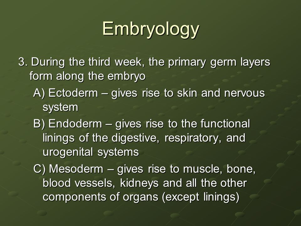 Embryology 3. During the third week, the primary germ layers form along the embryo. A) Ectoderm – gives rise to skin and nervous system.