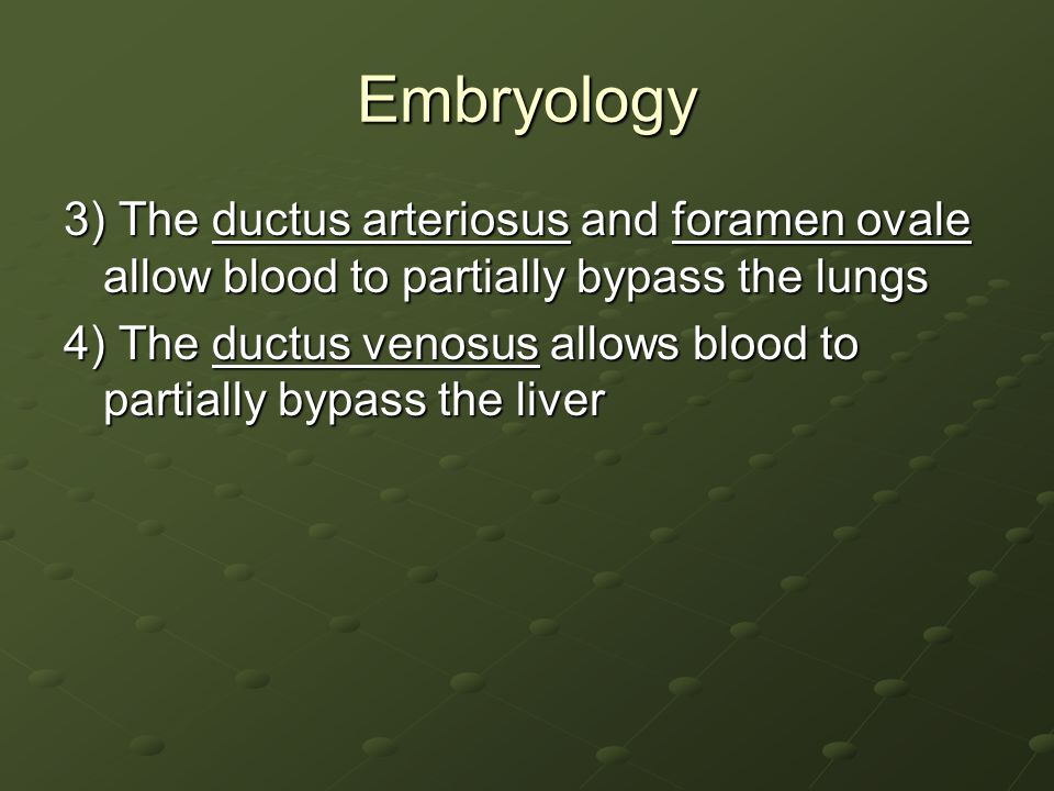 Embryology 3) The ductus arteriosus and foramen ovale allow blood to partially bypass the lungs.