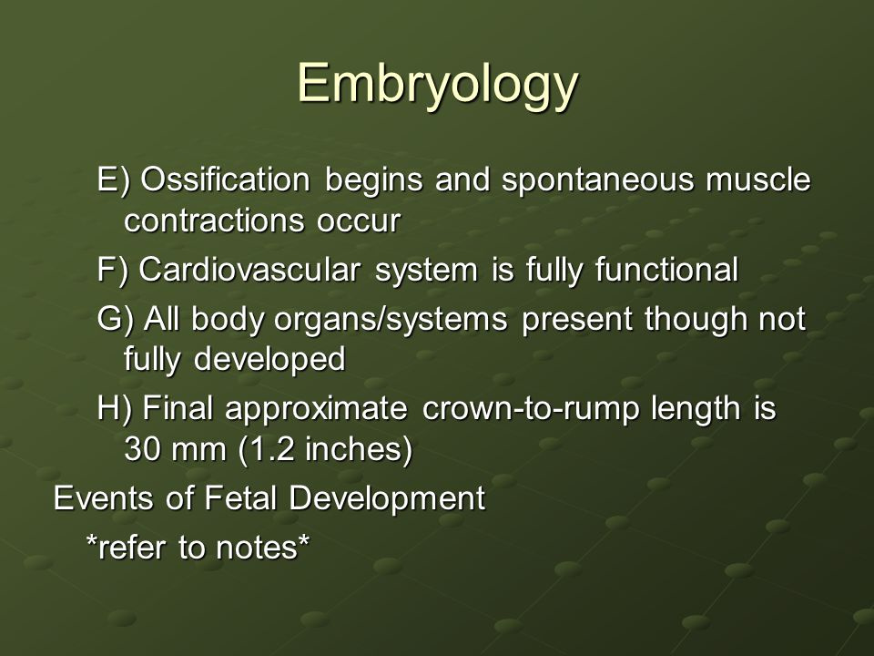 Embryology E) Ossification begins and spontaneous muscle contractions occur. F) Cardiovascular system is fully functional.