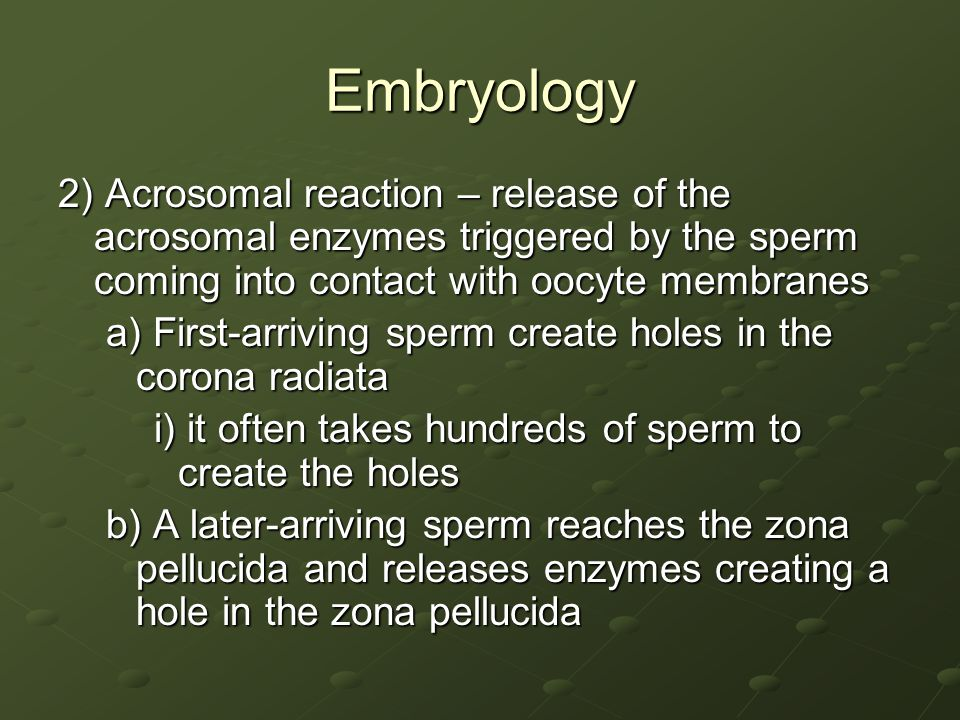 Embryology 2) Acrosomal reaction – release of the acrosomal enzymes triggered by the sperm coming into contact with oocyte membranes.