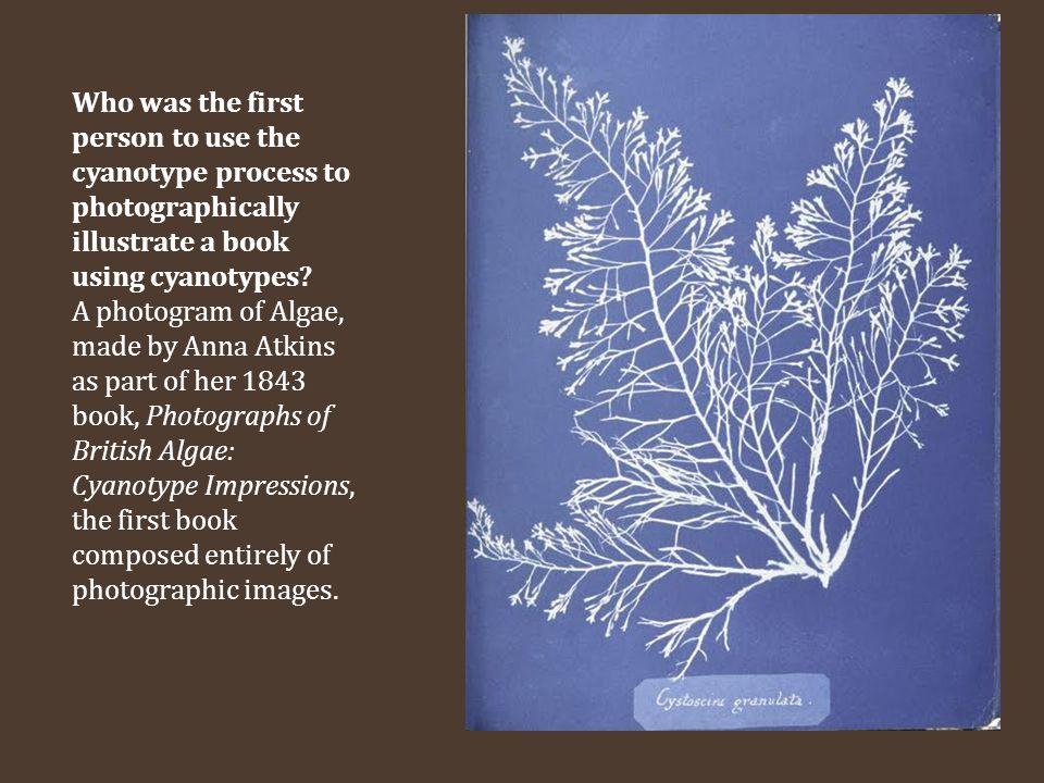 Who was the first person to use the cyanotype process to photographically illustrate a book using cyanotypes