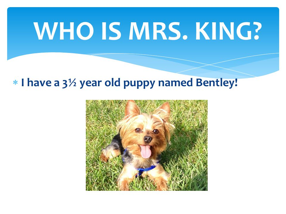 WHO IS MRS. KING I have a 3½ year old puppy named Bentley!