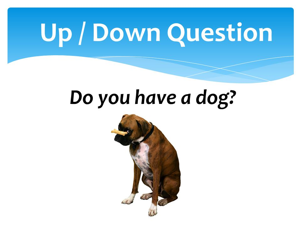 Up / Down Question Do you have a dog
