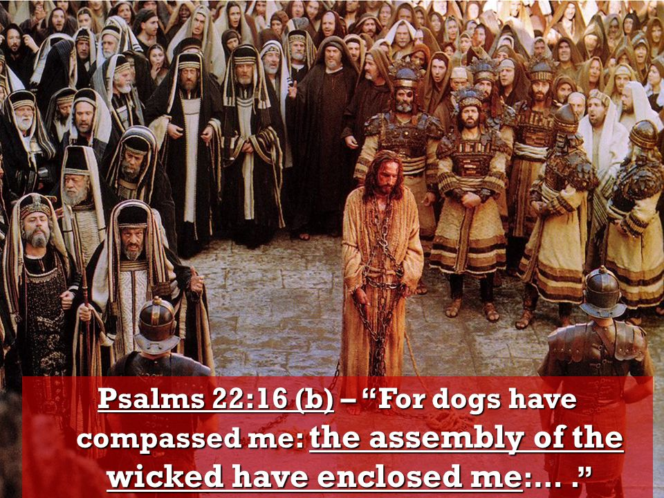 Psalms 22:16 (b) – For dogs have compassed me: the assembly of the wicked have enclosed me:… .