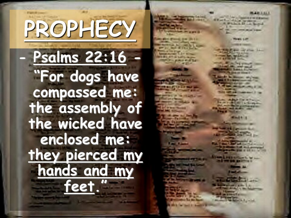 PROPHECY - Psalms 22:16 - For dogs have compassed me: the assembly of the wicked have enclosed me: they pierced my hands and my feet.