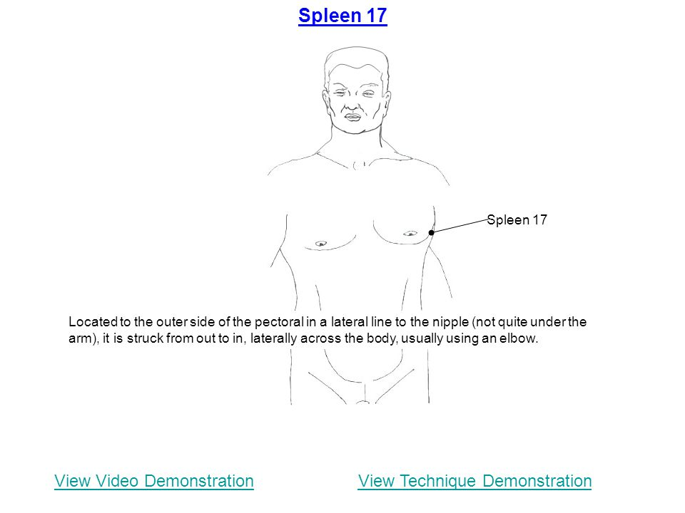Spleen 17 View Video Demonstration View Technique Demonstration
