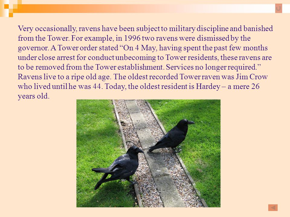 Very occasionally, ravens have been subject to military discipline and banished from the Tower. For example, in 1996 two ravens were dismissed by the governor. A Tower order stated On 4 May, having spent the past few months under close arrest for conduct unbecoming to Tower residents, these ravens are to be removed from the Tower establishment. Services no longer required.