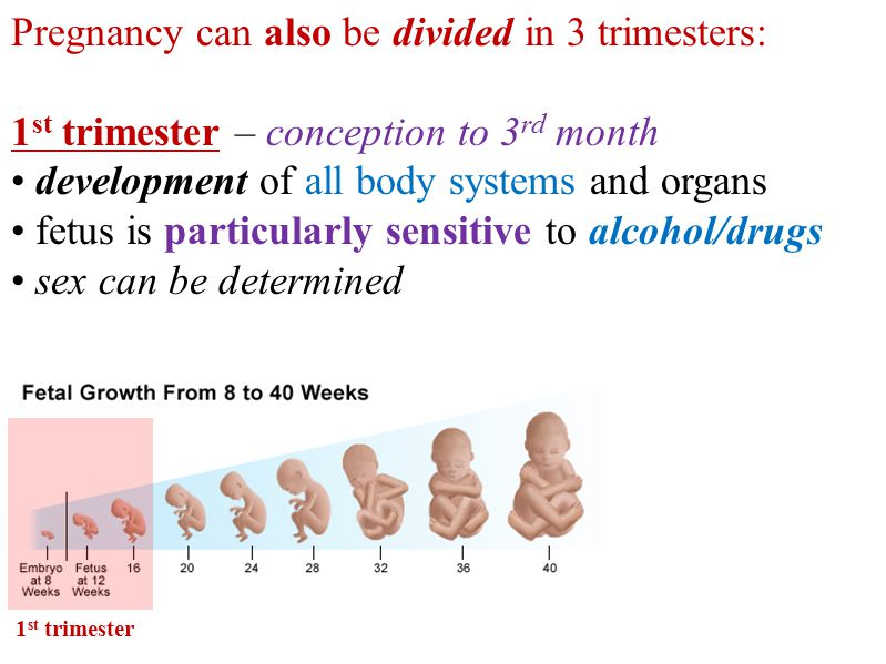 Pregnancy can also be divided in 3 trimesters: