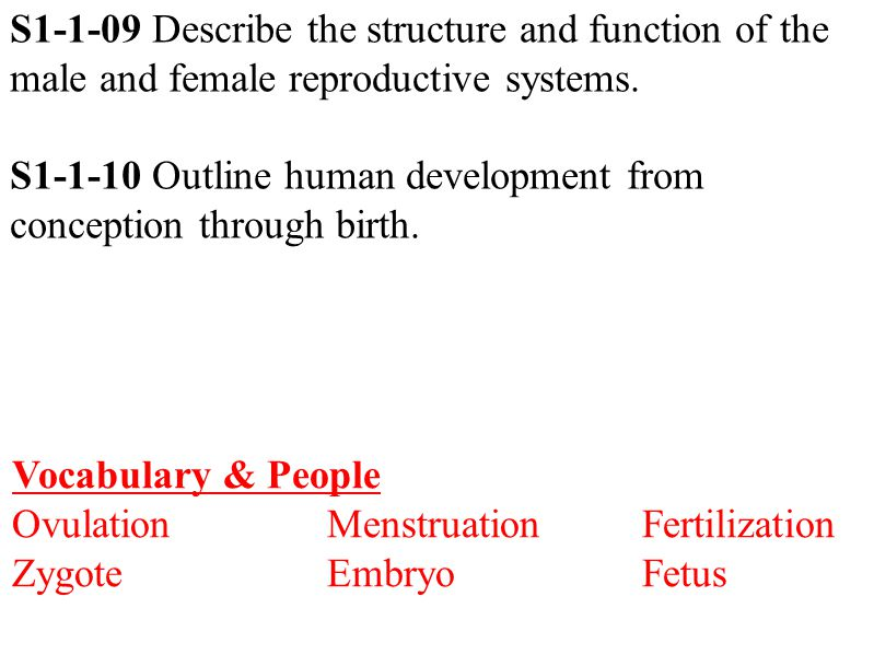 S1-1-09 Describe the structure and function of the male and female reproductive systems.