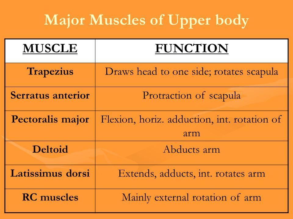Major Muscles of Upper body