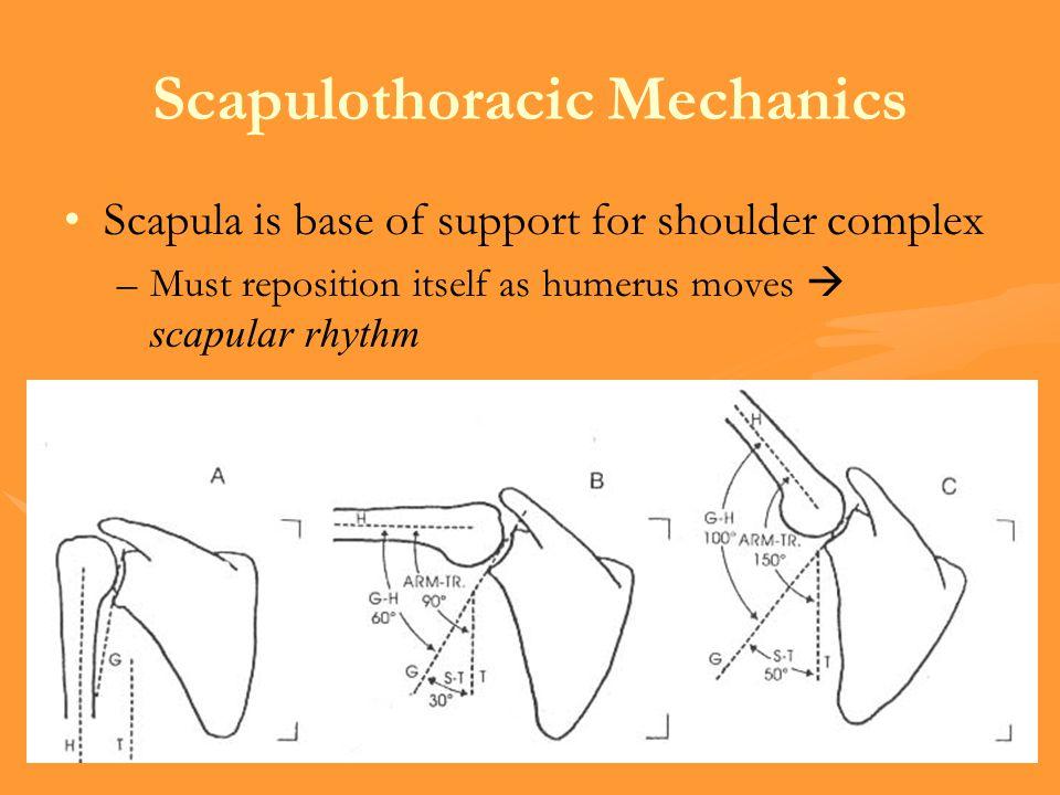 Scapulothoracic Mechanics
