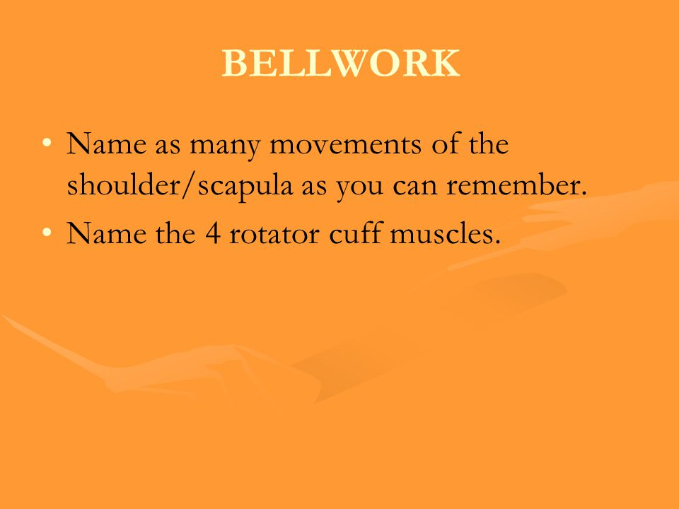 BELLWORK Name as many movements of the shoulder/scapula as you can remember.