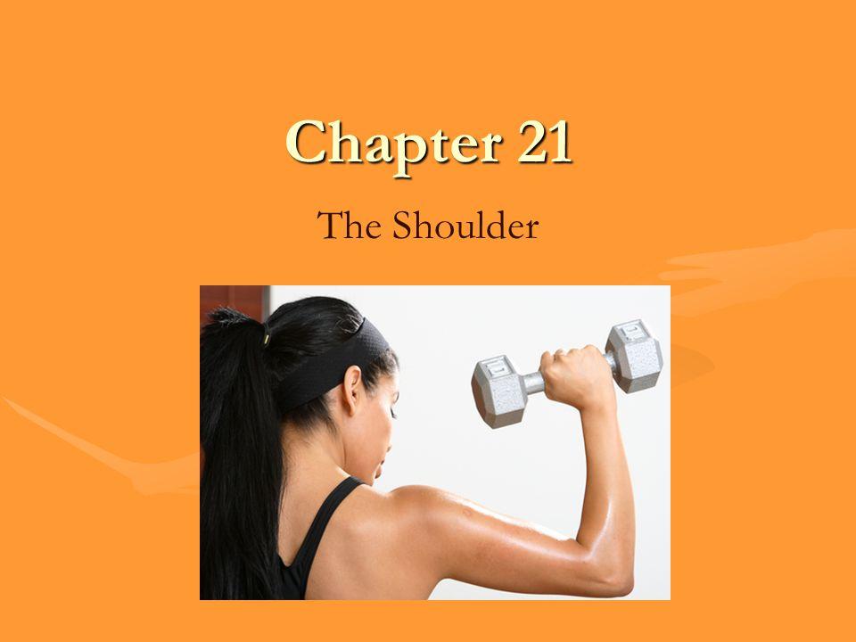 Chapter 21 The Shoulder
