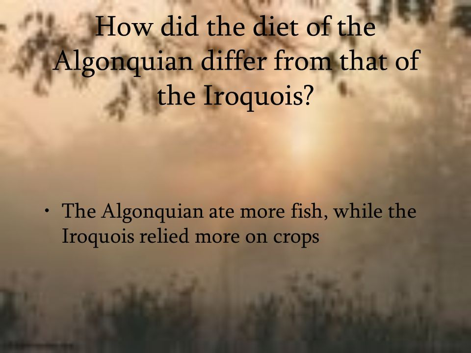 How did the diet of the Algonquian differ from that of the Iroquois