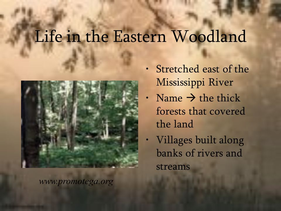 Life in the Eastern Woodland