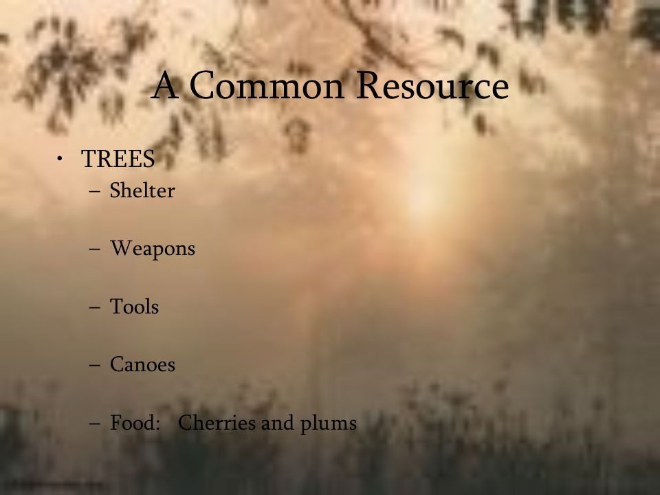 A Common Resource TREES Shelter Weapons Tools Canoes