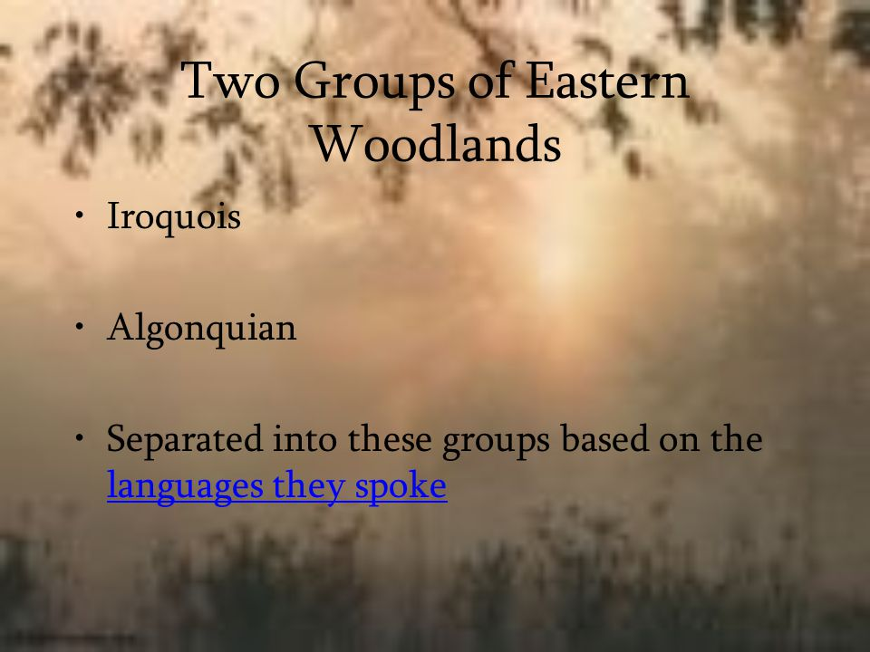 Two Groups of Eastern Woodlands