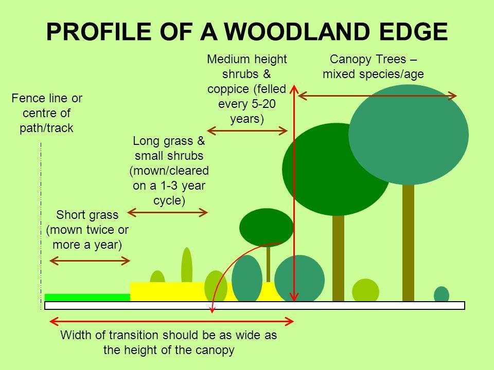 PROFILE OF A WOODLAND EDGE
