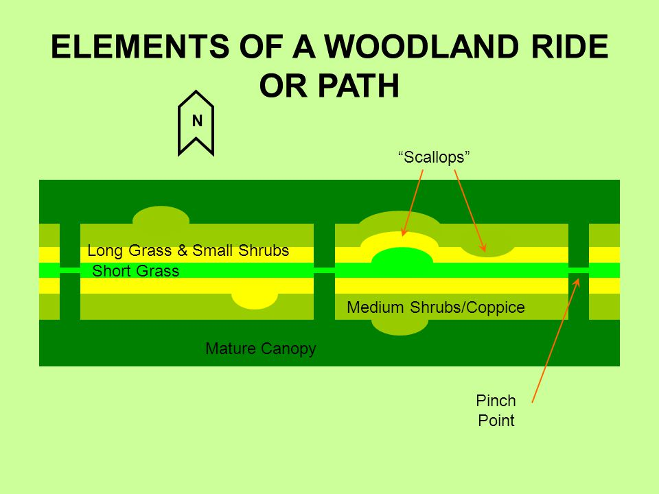 ELEMENTS OF A WOODLAND RIDE OR PATH