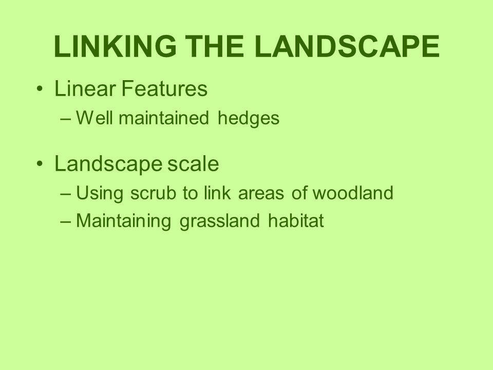 LINKING THE LANDSCAPE Linear Features Landscape scale