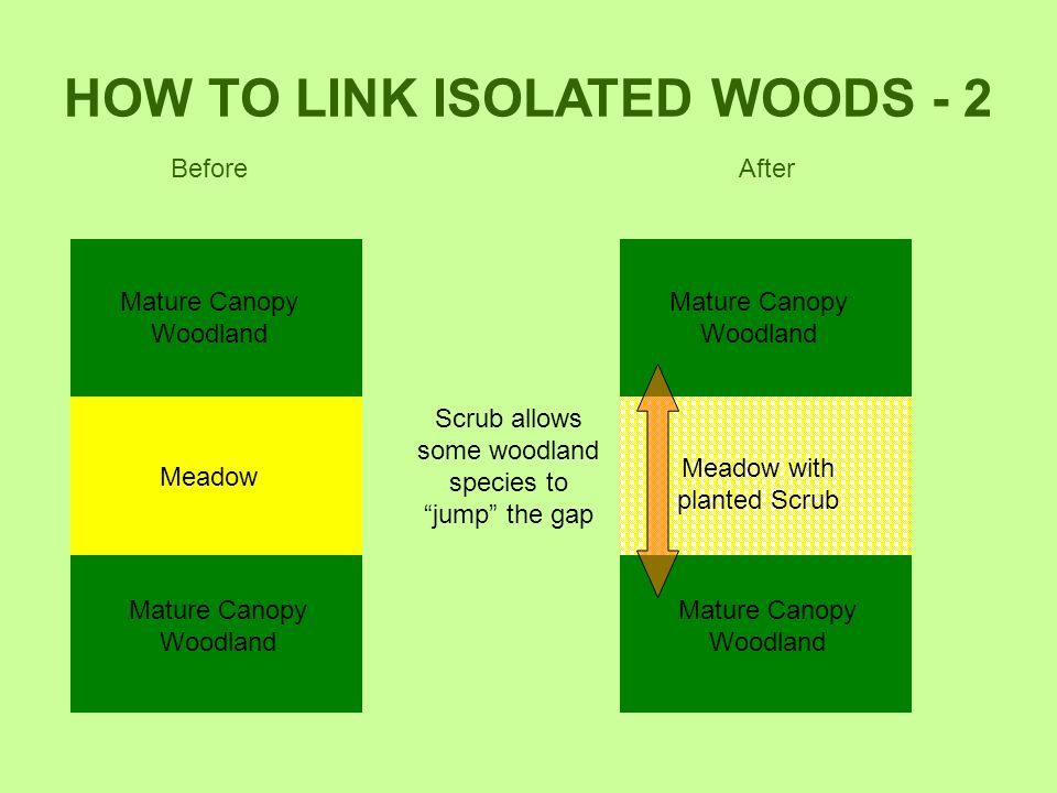 HOW TO LINK ISOLATED WOODS - 2