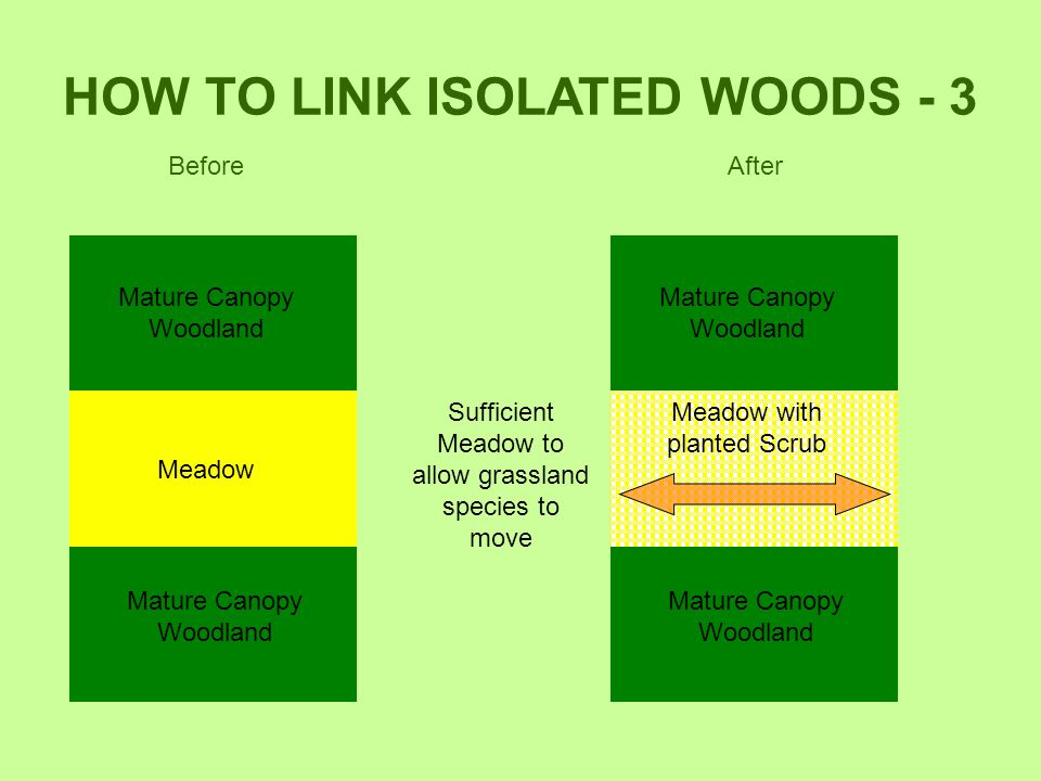 HOW TO LINK ISOLATED WOODS - 3