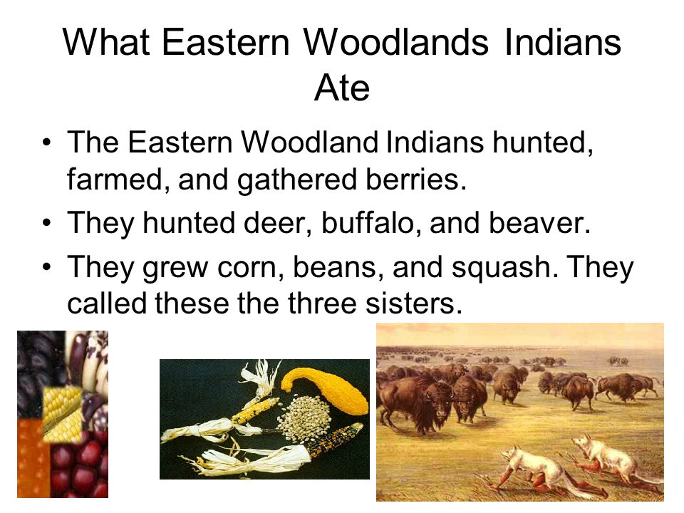 What Eastern Woodlands Indians Ate