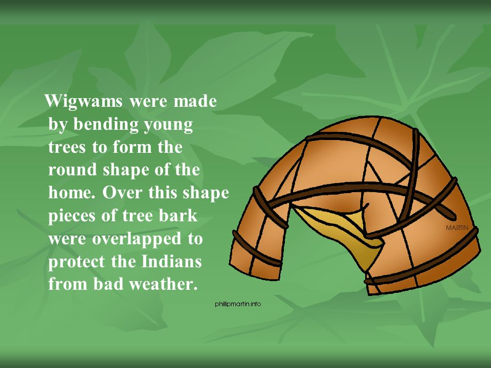 Wigwams were made by bending young trees to form the round shape of the home.