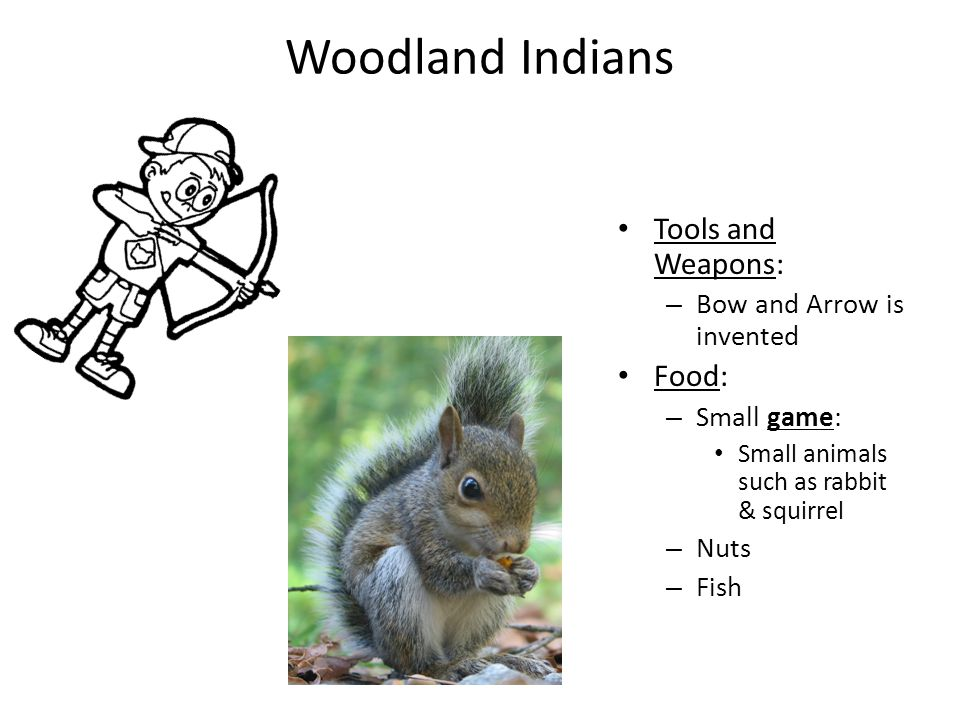 Woodland Indians Tools and Weapons: Food: Bow and Arrow is invented