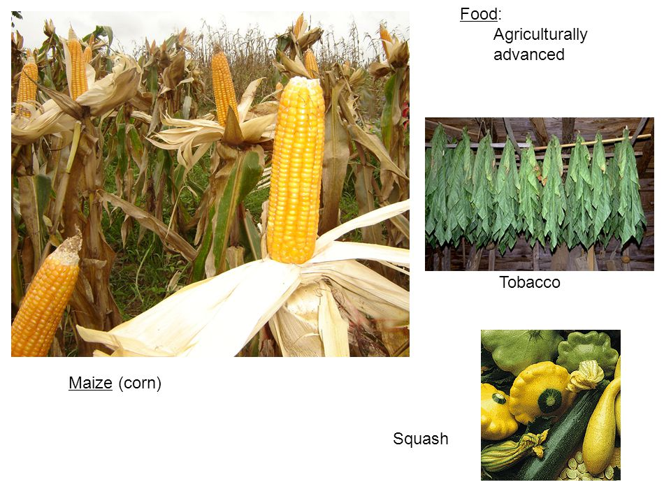 Food: Agriculturally advanced Tobacco Maize (corn) Squash
