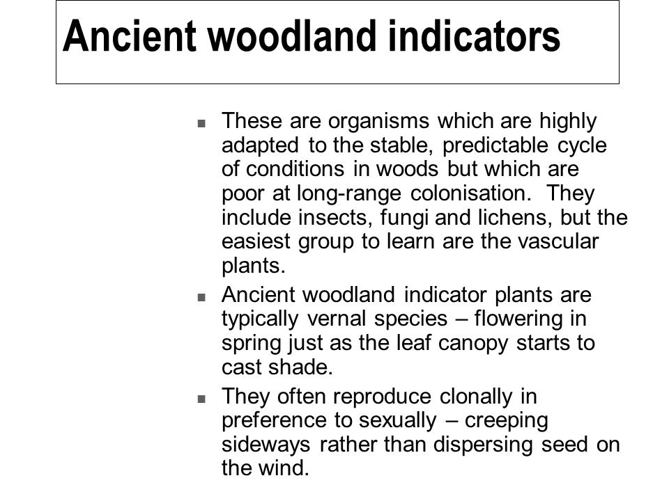 Ancient woodland indicators