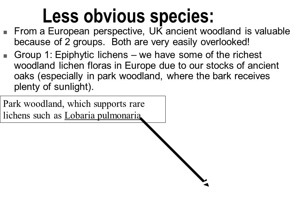 Less obvious species: From a European perspective, UK ancient woodland is valuable because of 2 groups. Both are very easily overlooked!