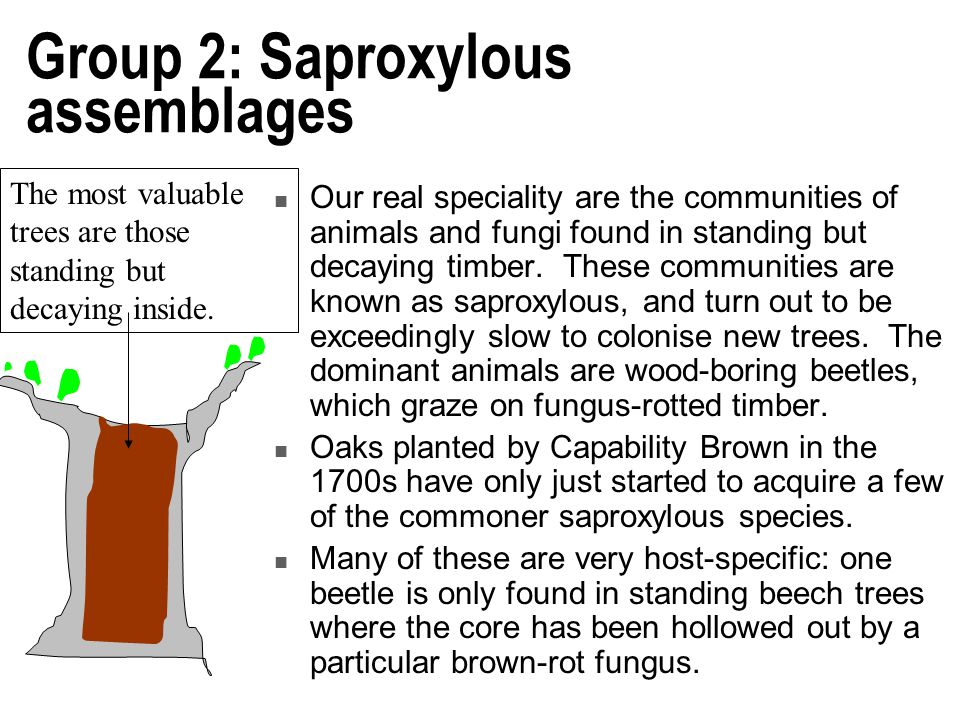 Group 2: Saproxylous assemblages