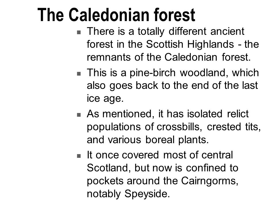 The Caledonian forest There is a totally different ancient forest in the Scottish Highlands - the remnants of the Caledonian forest.