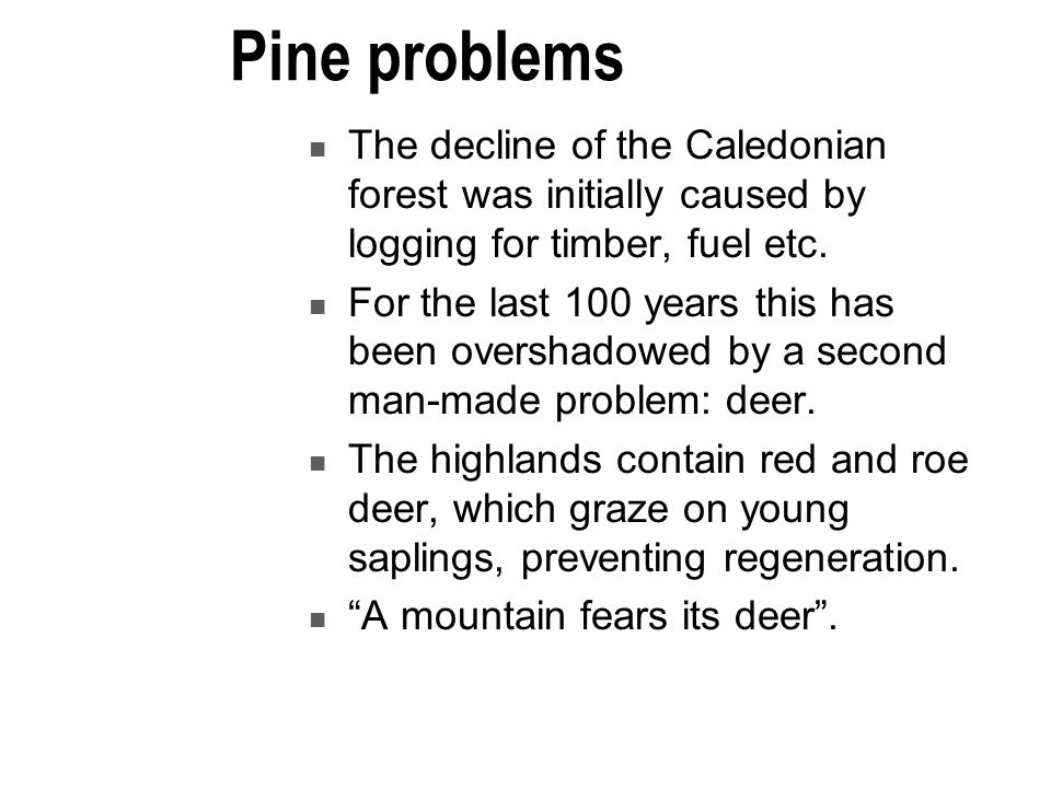 Pine problems The decline of the Caledonian forest was initially caused by logging for timber, fuel etc.