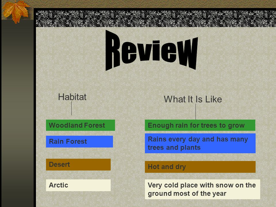 Review Habitat What It Is Like Woodland Forest