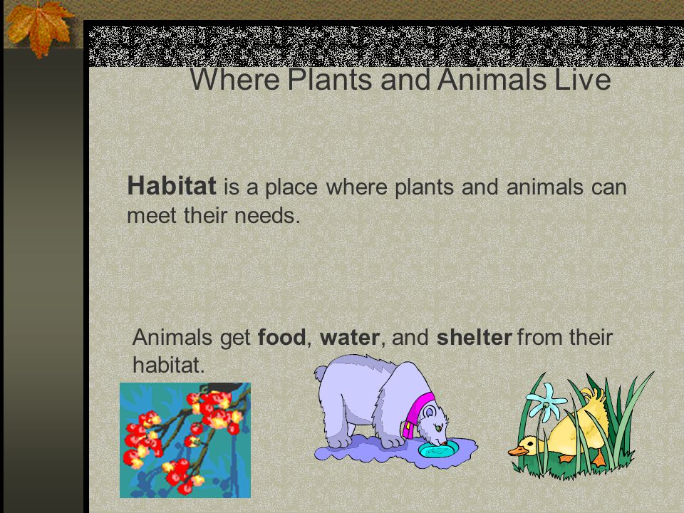 Where Plants and Animals Live