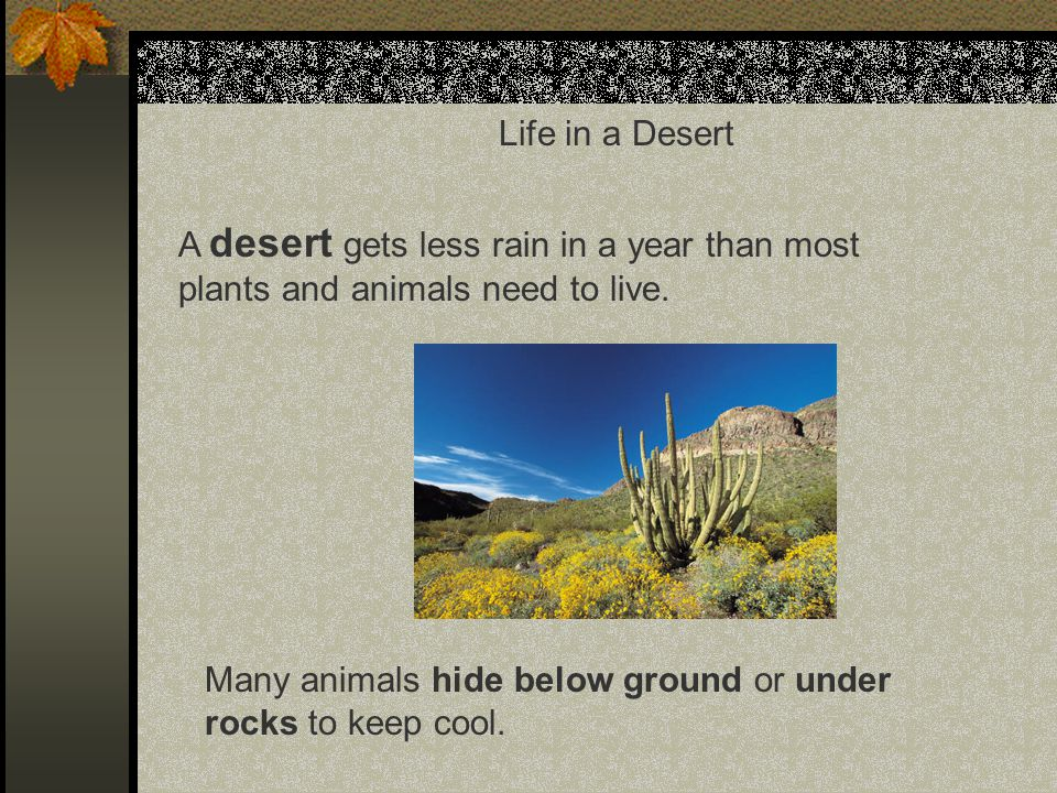 Life in a Desert A desert gets less rain in a year than most plants and animals need to live.