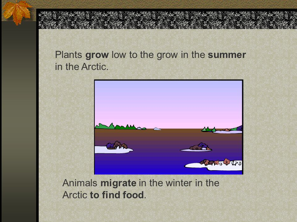Plants grow low to the grow in the summer in the Arctic.