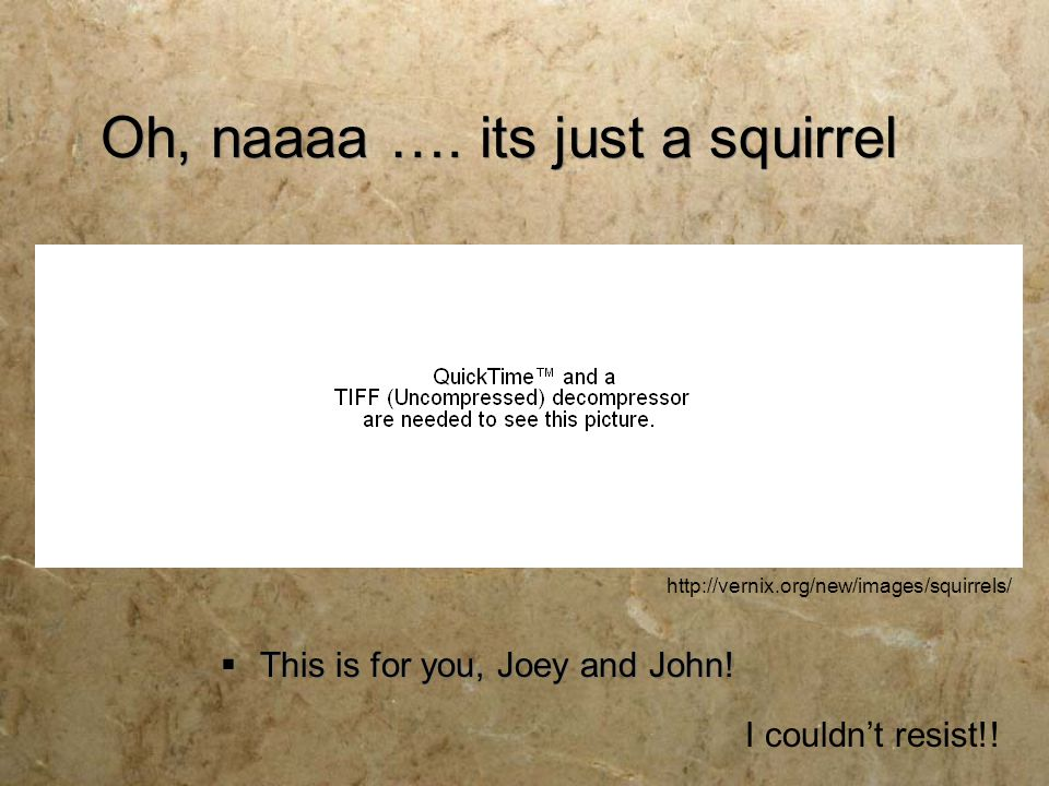 Oh, naaaa …. its just a squirrel