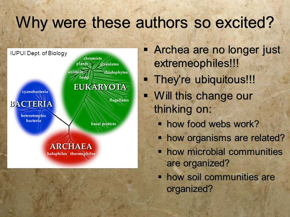 Why were these authors so excited