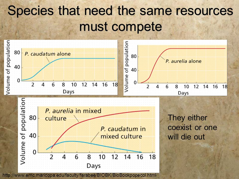 Species that need the same resources must compete