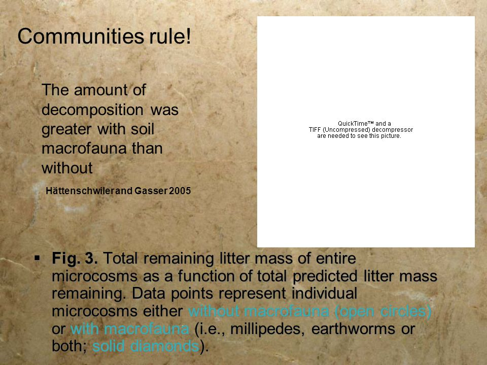 Communities rule! The amount of decomposition was greater with soil macrofauna than without. Hättenschwiler and Gasser 2005.