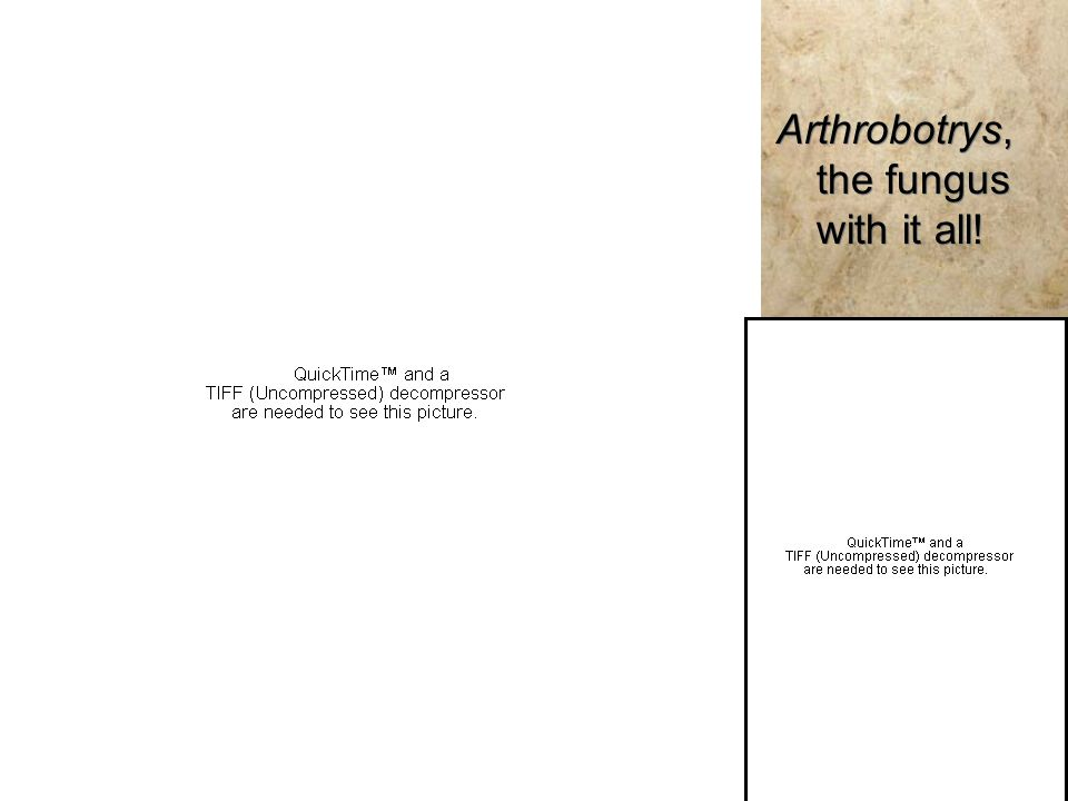 Arthrobotrys, the fungus with it all!