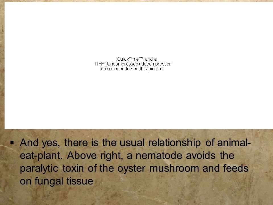 And yes, there is the usual relationship of animal-eat-plant