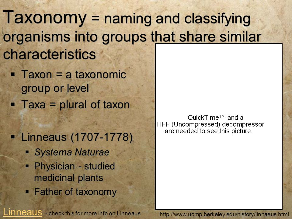 Taxonomy = naming and classifying organisms into groups that share similar characteristics