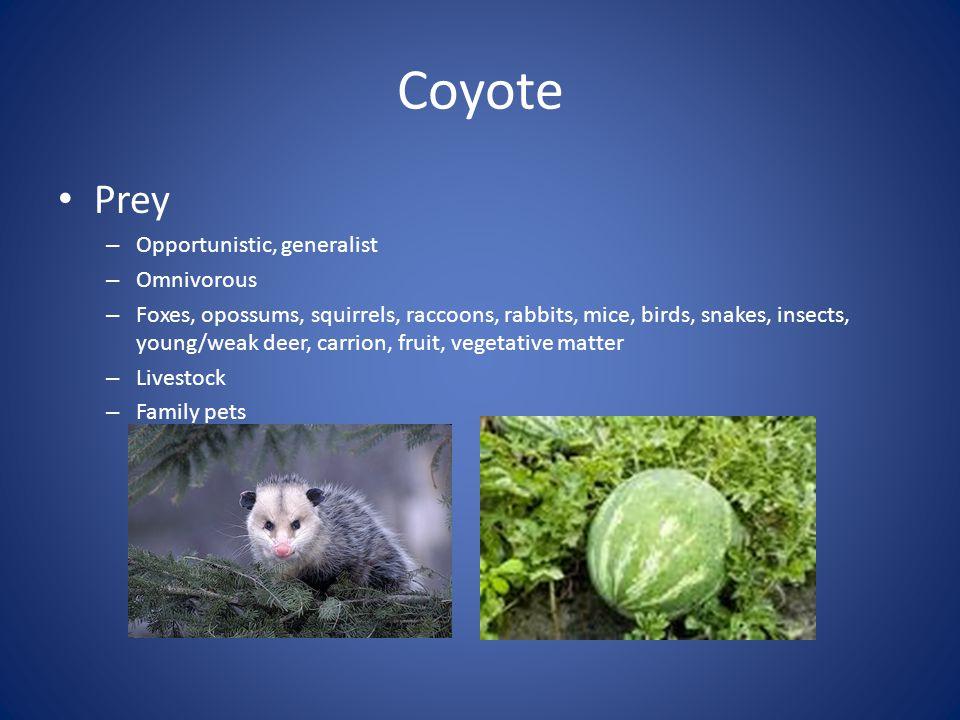 Coyote Prey Opportunistic, generalist Omnivorous