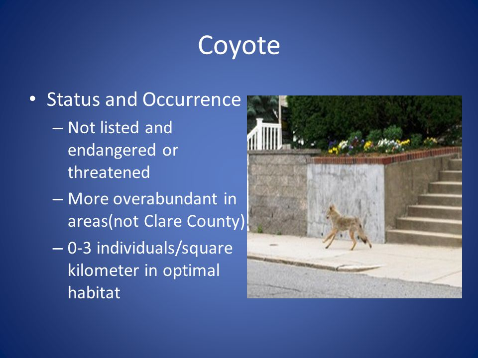Coyote Status and Occurrence Not listed and endangered or threatened